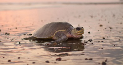 sunsetshack_turtle